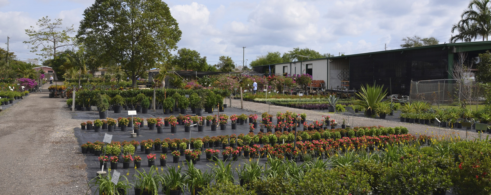 Nu Turf of Pompano Beach - Landscape Nursery, Plant, Tree & Garden ...